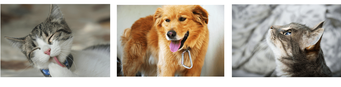CFY-Pets